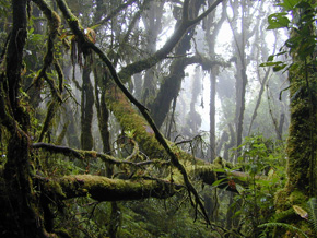 熱帯雲霧林
