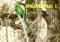プラビッシマ!2 コスタリカ写真集 ケツァールの棲む森といきものたちの楽園